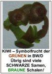 kiwi-text-schale